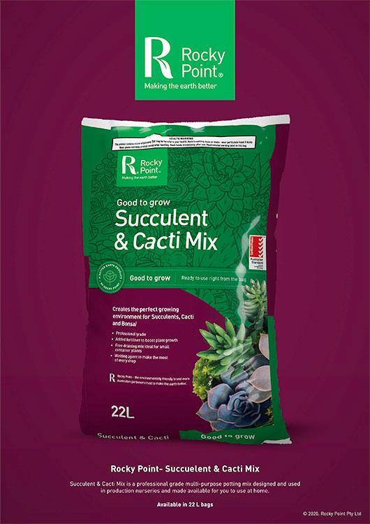 Succulent & Cacti Mix